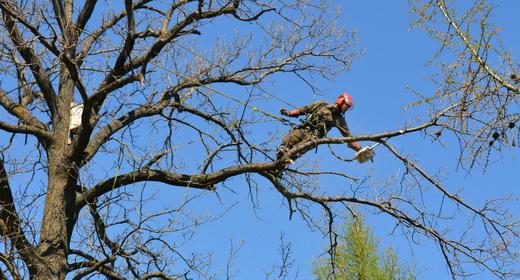 Удаление деревьев, Казань